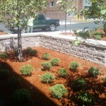 Commercial:Plantings & Landscaping
